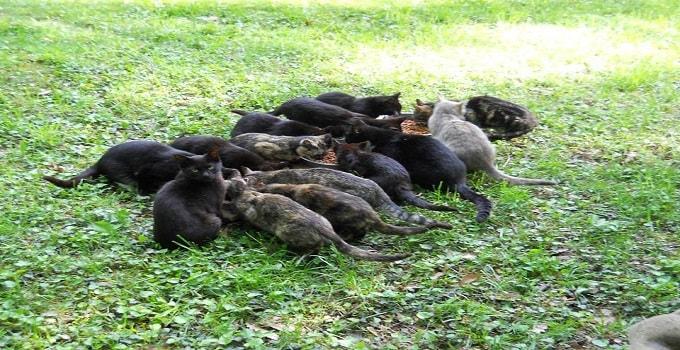 Mark's feral family cerca 2011
