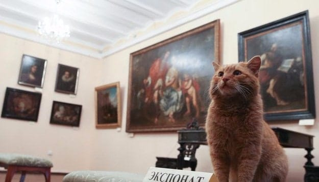 Museum's April Fool's Joke Leads to a Real Job for Maray, the Ginger Cat!
