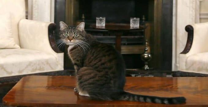 Freya The Chancellor's cat CREDIT: PA