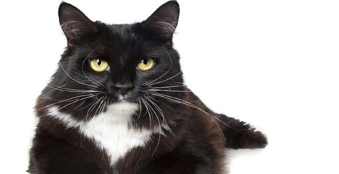 A neighbourhood cat caused a false alarm when a Palmerston couple thought their house was being burgled. PICTURE: Supplied