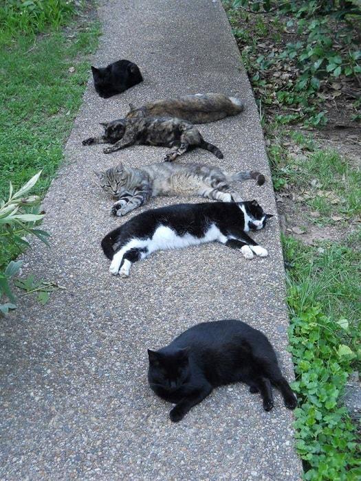 Sleepy cats on Mark's sidewalk cerca 2014!
