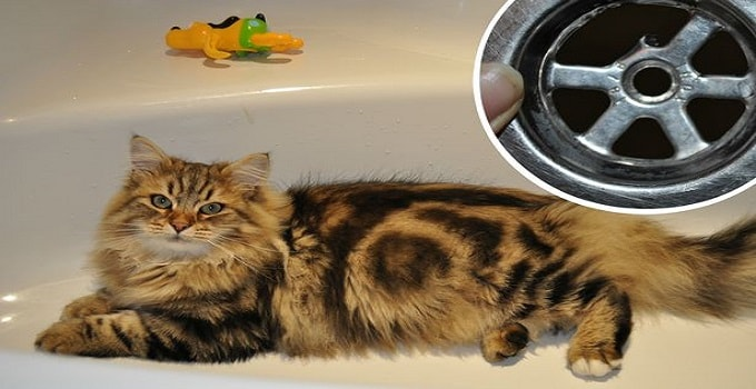 Poor cat Kot Bayun was howling in pain after a late-night wash went horribly wrong