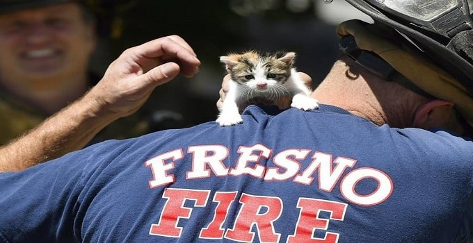 Kitten Saved From Fresno Fire Cuddles With One Of Her Rescuers! – VIDEO