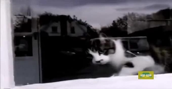 Cat Waits Patiently for the Mailman Every Day … Just To Do This! – VIDEO