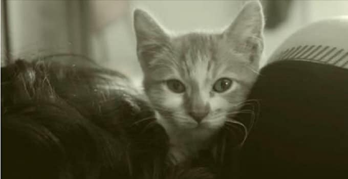 """Adoptable Cats at Easy Bay SPCA Star in Cute Video Rendition of Adele Song, """"Hello."""" – VIDEO"""