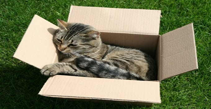 There is now an official (and scientific!) reason why cats love boxes. Researchers have confirmed that cats take a liking for enclosed cardboard spaces because it aids in lowering stress.