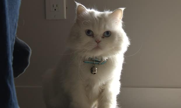 Syrian Refugee Cat Makes It All the Way to His Family in Canada