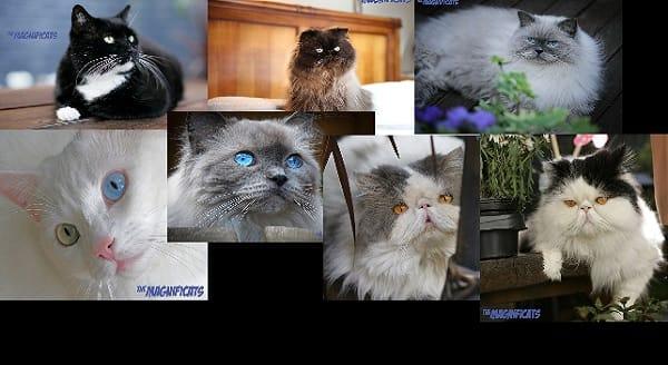 Meet Britain's Most Famous Internet Cats!
