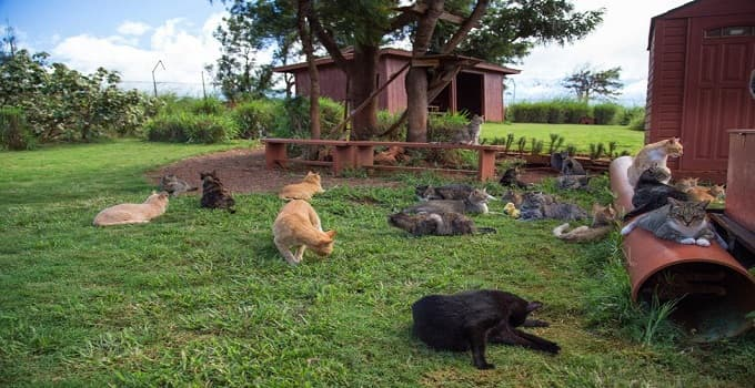 Cat Sanctuary For Feral Cats Set to Open in Volusia County, Florida!