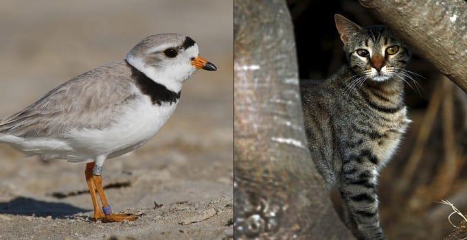 At Jones Hill Beach in New York, it's Cat People vs. Bird People