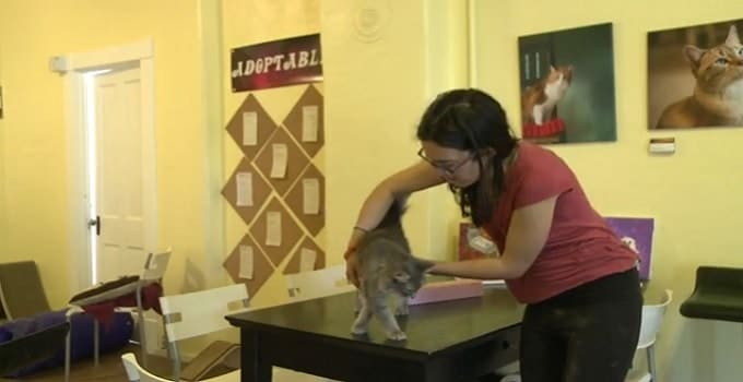 Vegan Cat Cafe, Opening Soon in New Mexico