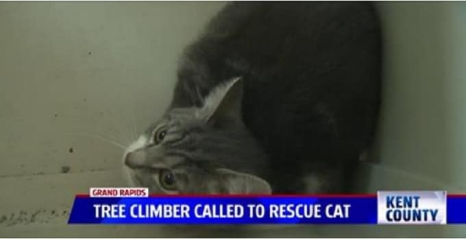 Young Cat Rescued from 85-Foot High Tree