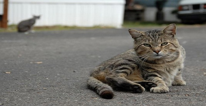 A file photo of a Marshall homeless cat. (Photo: John Grap/Enquirer file)