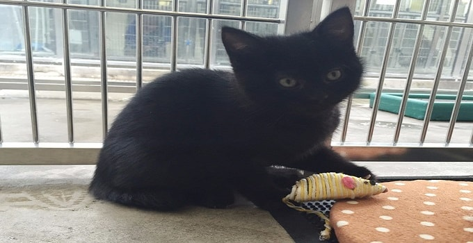 Staff at Adoption Center Astounded by the Arrival of a Kitten Who is a Hermaphrodite!