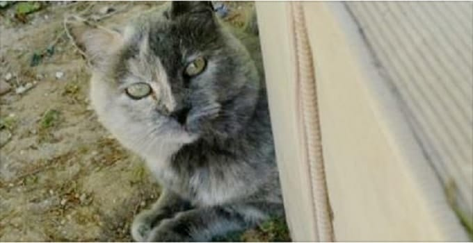 The Story of Creasy, A Rare Male Tortie Cat, Who Went From Living the Street Life to Living Like a King!
