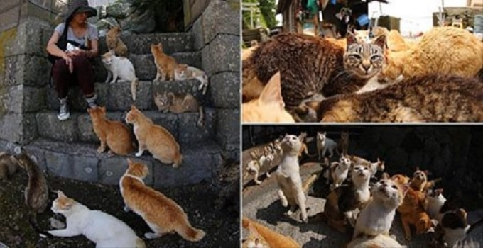 Cat Island in Japan, With Brand New Images Taken by Photographer Kei Nomiyama