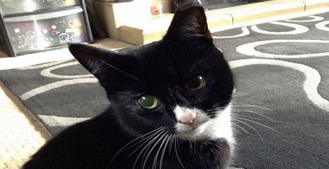 """""""Miracle Tuxedo Kitty"""" Recovering After Being Shot 30 TIMES With Pellet Gun!"""