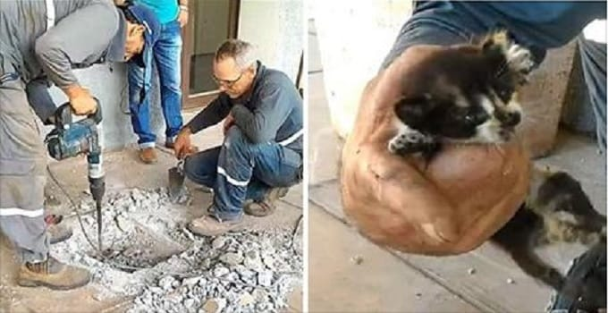 They Heard Frantic Meows Coming from Under the Ground – and the Rescue Began!