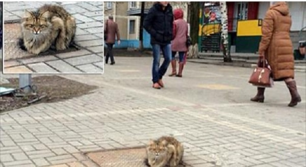 Cat Returns to the Very Spot She Was Abandoned at Every Day For a Year