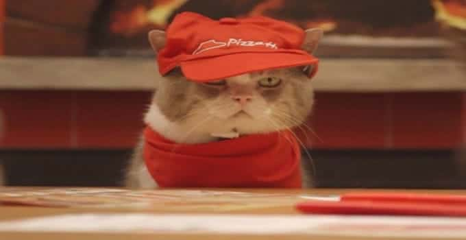 "Gorgeous Cats ""Hired"" at Pizza Hut in Japan! - VIDEO"