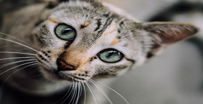 Top Names for Cats in the Year 2015!