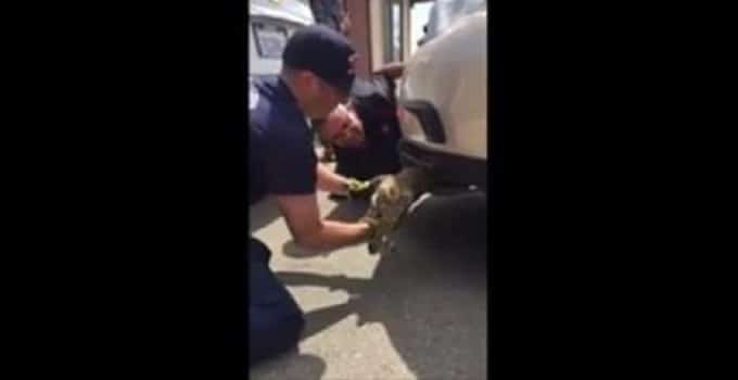 Cat Stuck Inside Car Fender Takes Ride From Mexico to Oceanside – VIDEO