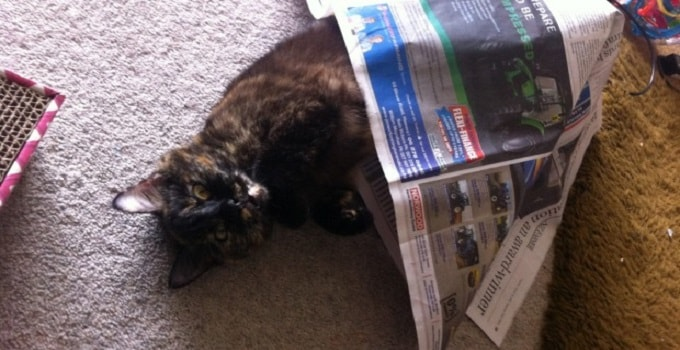 Kitty has been missing at the isolated bach settlement of Tongaporutu in North Taranaki for two weeks.