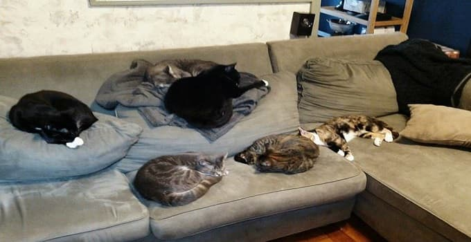 Photo credit: Facebook/Bed Stuy Kitty Crew
