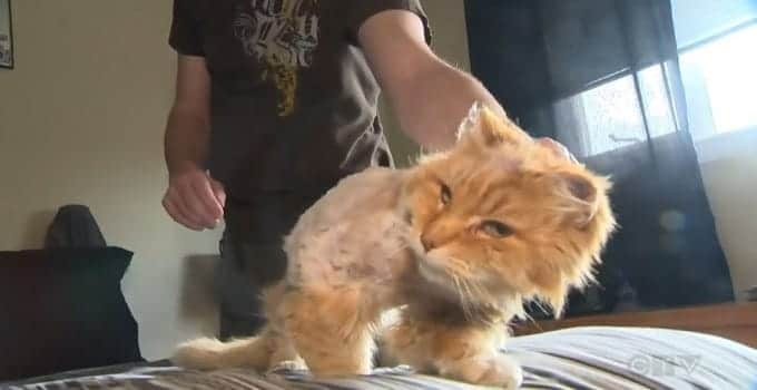 This cat was reunited with its original owner after 10 years apart.