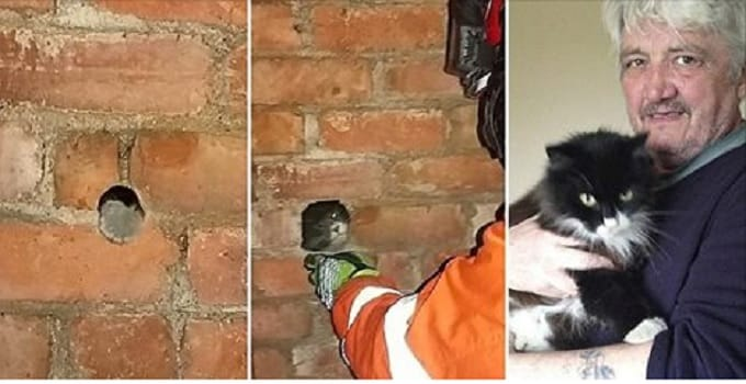 """Cat Who Had Been """"Missing"""" Was Trapped Inside Chimney!"""