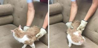 """Thrift Store Discovers Cat """"Hiding Out"""" in Donated Couch"""