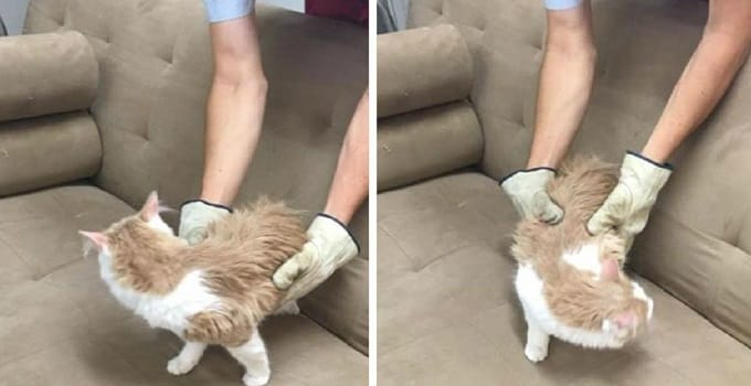 Thrift store finds cat living in couch. (Photo: Carbon/Emery online yard sale Facebook group page)