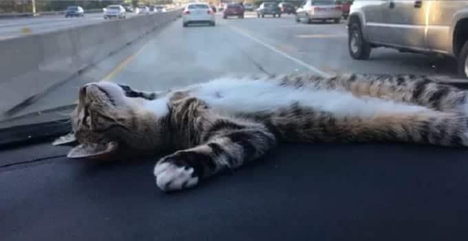 "Meet Rory! Adorable ""Dashboard Kitty"" Loving and Enjoying Life! – VIDEO"