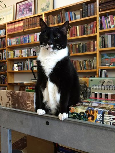 1-Cat-Lives-In-A-Bookstore-min