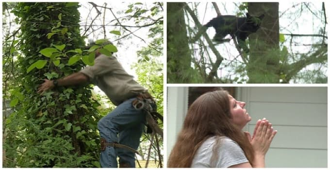 'Swamp Man' to the Rescue! Man Saves Family Cat in Tree for 11 Days! – VIDEO!