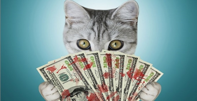 Declawing is Bad For Your Cat, But It's a Cash Cow for Veterinarians!