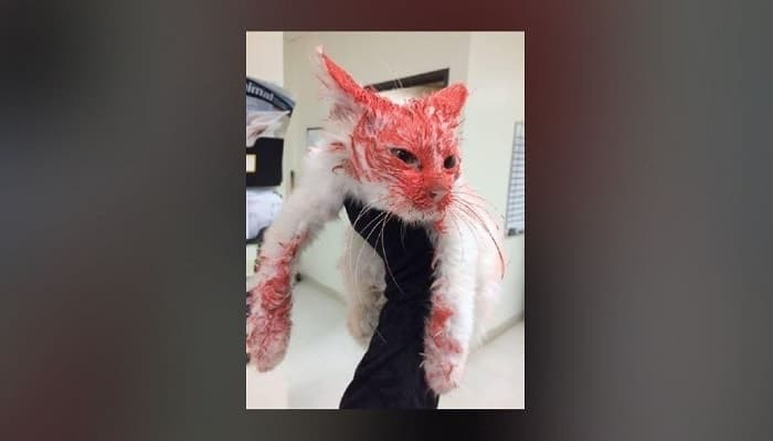 Man Who Spay Painted Cat in Michigan Pleads Guilty and is Awaiting Sentencing!