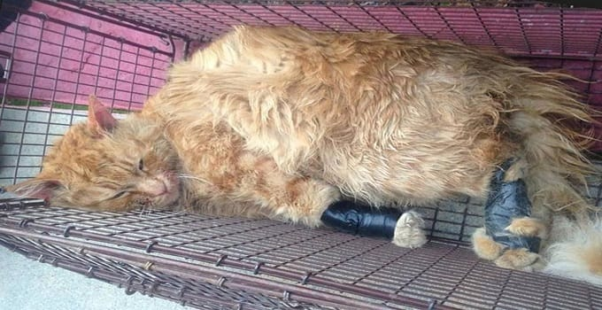 Man Who Made Headlines Last Year for Taping Ginger Cat's Paws and Mouth, Is Sentenced!