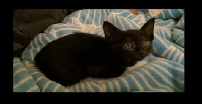 Florida Man Completely Disassembles Car to Rescue Trapped Black Kitten!