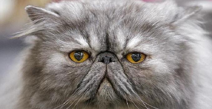 "Saudi Cleric Issues ""Catwa"" Ban on Cat Selfies"
