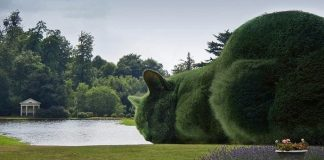 Topiary Cats 'Seen by Millions' on Facebook!
