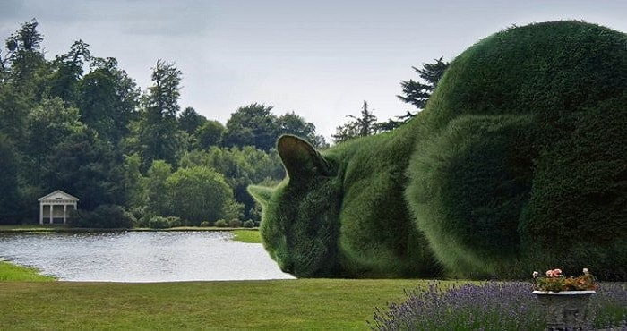Topiary Cats 'Seen by Millions' on Facebook! 1