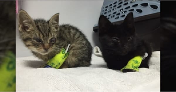 Animal Cruelty Fund to be Created For Injured Kittens!