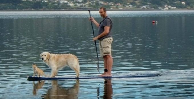 Peter Ellison paddleboards with Tama the dog and Ellie the cat at Macandrew Bay, Dunedin.