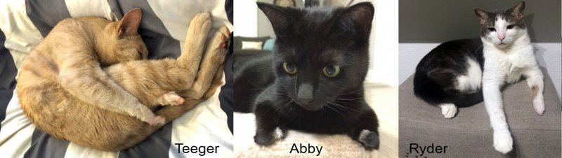 Teegar, Abby, and Ryder suffered severe complications as a result of botched declawing, leading to the amputaiton of paws and limbs.