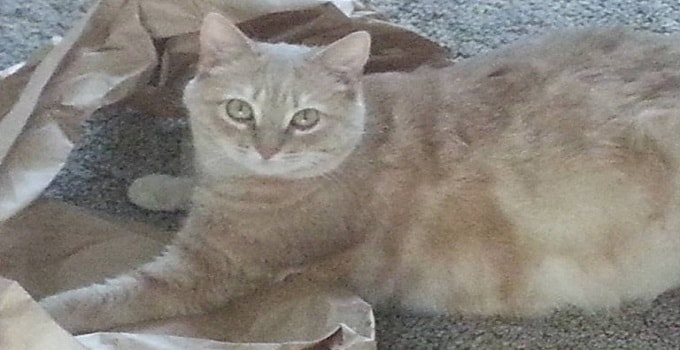 Police Officer Will Not Face Charges In the Shooting of Pet Cat