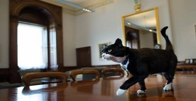 """UPDATE – Palmerston, the UK Foreign Office """"Mouser Cat"""" Makes His First Official Kill!"""