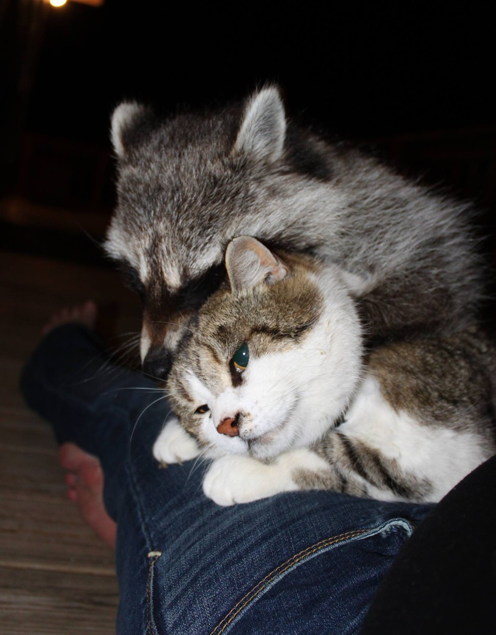 4-Cat-Helps-His-Mom-min