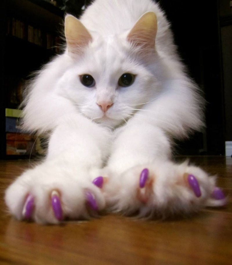 Soft Paws nail sheaths are an inexpensive, comfortable solution to cat scratching.