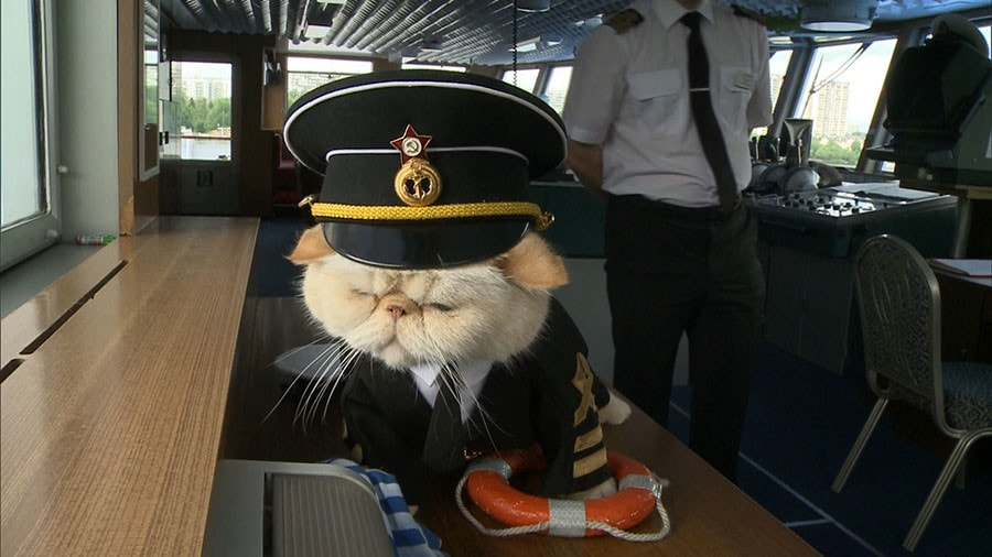 Sailor the Cat, Melting Hearts Aboard Russian Cruise Ship!